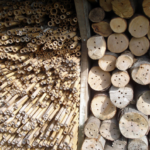 Hustle and Bustle at the Bee Hotel