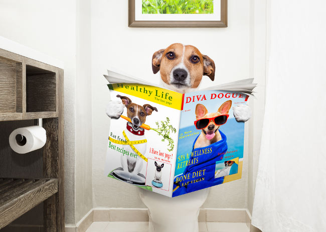 dog using indoor potty