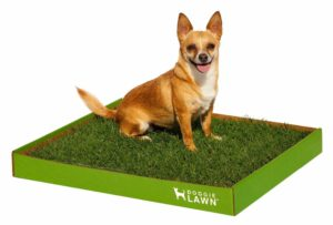 DoggieLawn Real Grass Dog Potty