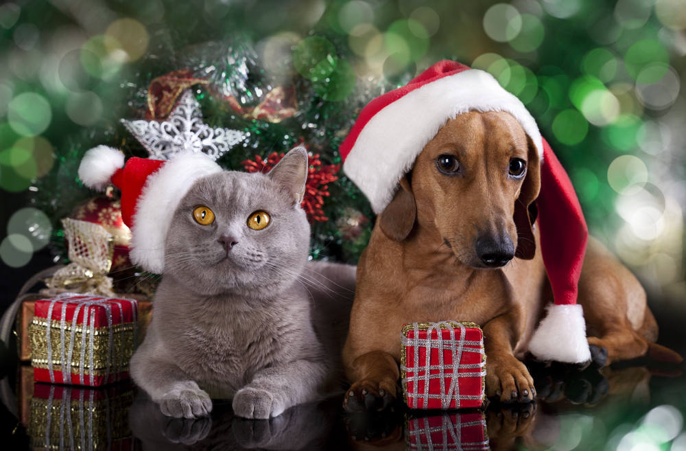 Cat and dog dressed for Christmas time