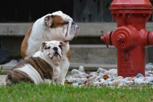 dogs sniffing fire hydrant