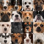 How Many Dog Breeds Are There in the World?