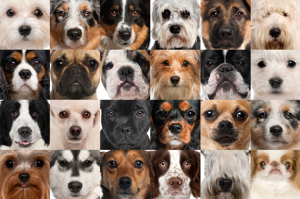 Collage of 24 different dog breeds