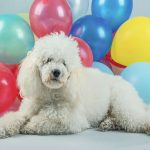 Why Are Dogs Scared of Balloons?