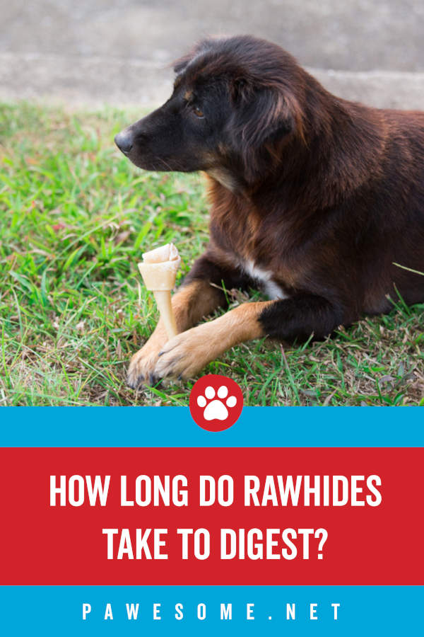 How Long Do Rawhides Take to Digest?