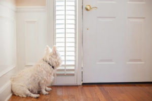 dog with separation anxiety waiting for owner at door
