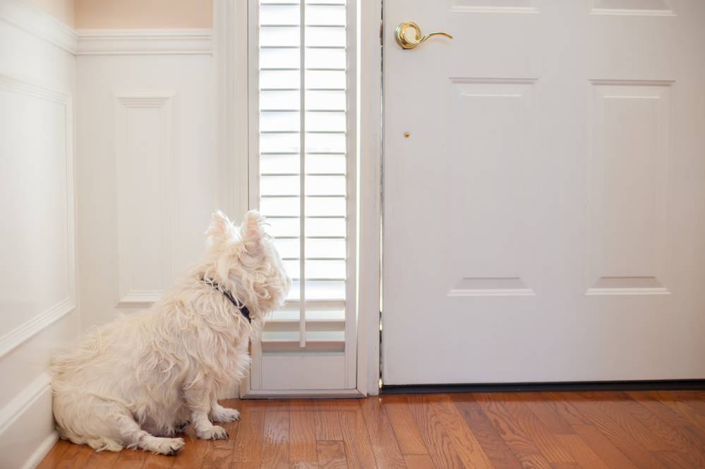 Dog waiting at door for owner