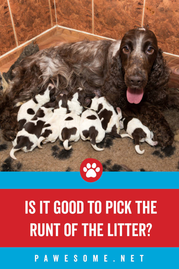 Is It Good to Pick the Runt of the Litter?