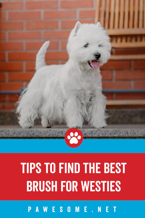 Tips to Find the Best Brush for Westies