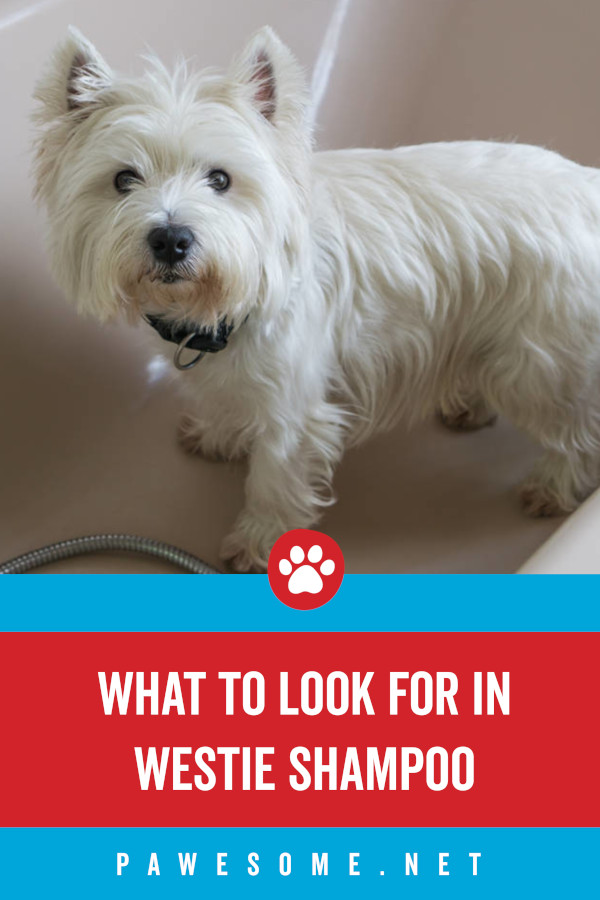 What to Look For in Westie Shampoo