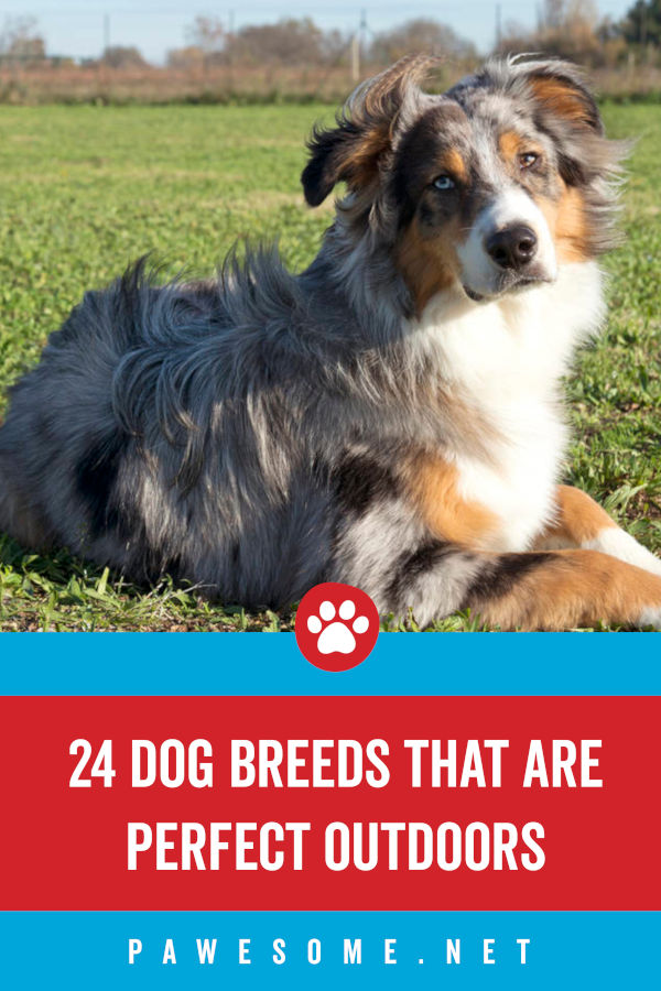 24 Dog Breeds That Are Perfect Outdoors