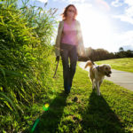 Is It Better to Feed Your Dog Before or After a Walk?