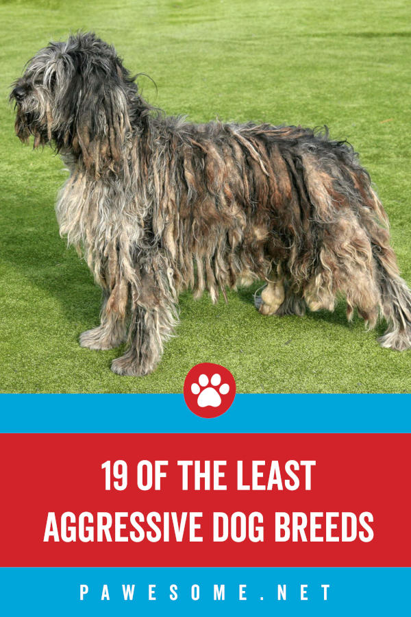 19 of the Least Aggressive Dog Breeds