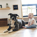Are Pit Bulls Safe Around Babies and Toddlers?