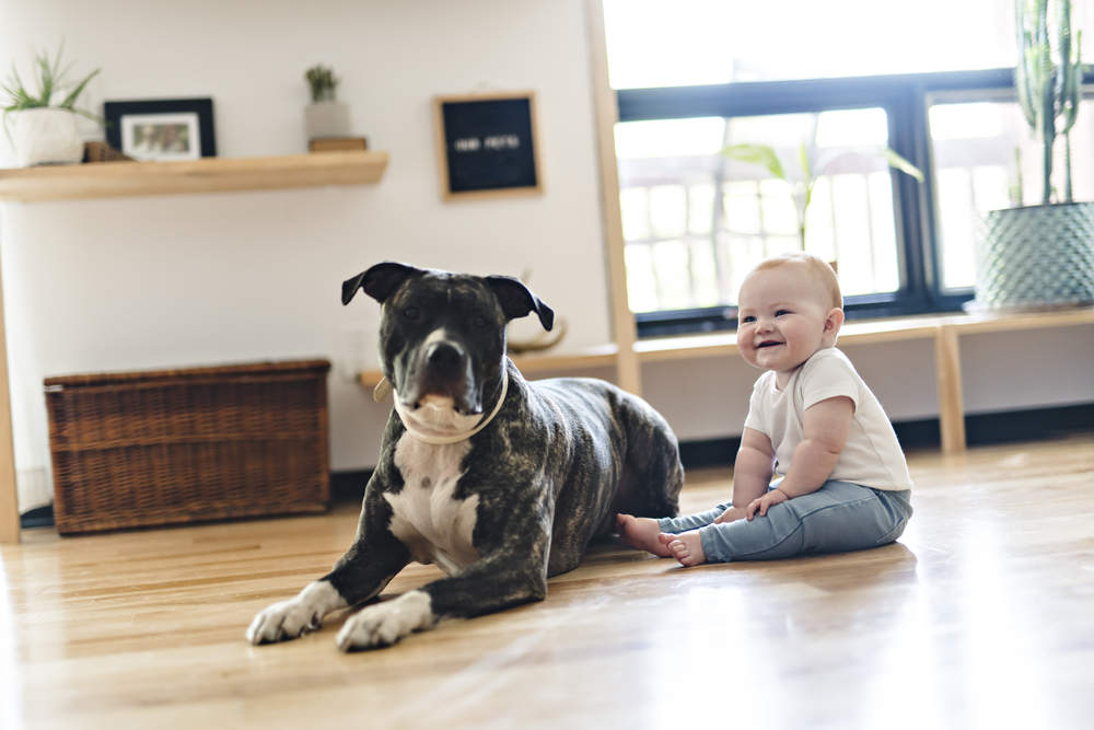 Baby sitting on floor with Pitbull