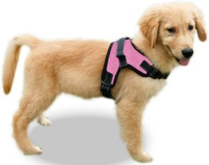Copatchy No Pull Adjustable Dog Harness