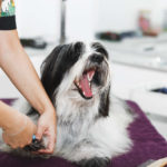 Can You Use Human Nail Clippers on Dogs?