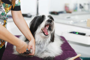 Dog getting nails clipped at groomer