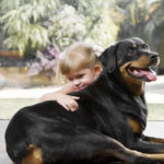 Are Rottweilers Good With Kids and Babies?