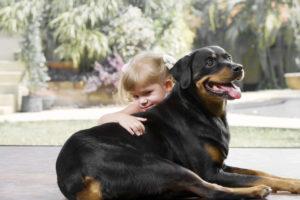 Happy Rottweiler with a kid