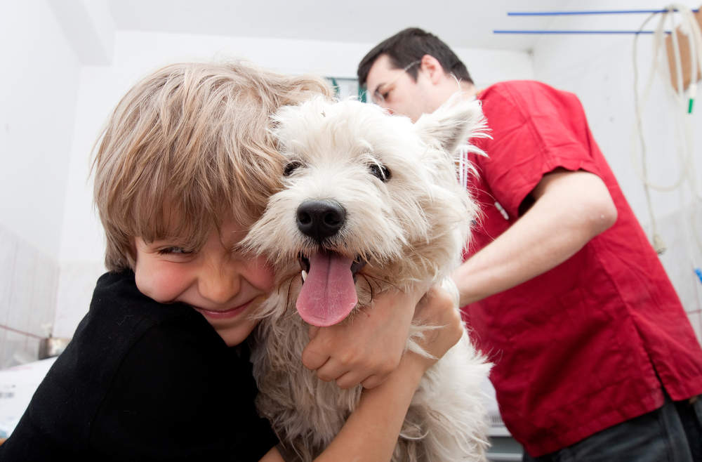 Westie with boy at vet for a checkup