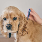 How Long After Flea Treatment Can I Bathe My Dog?