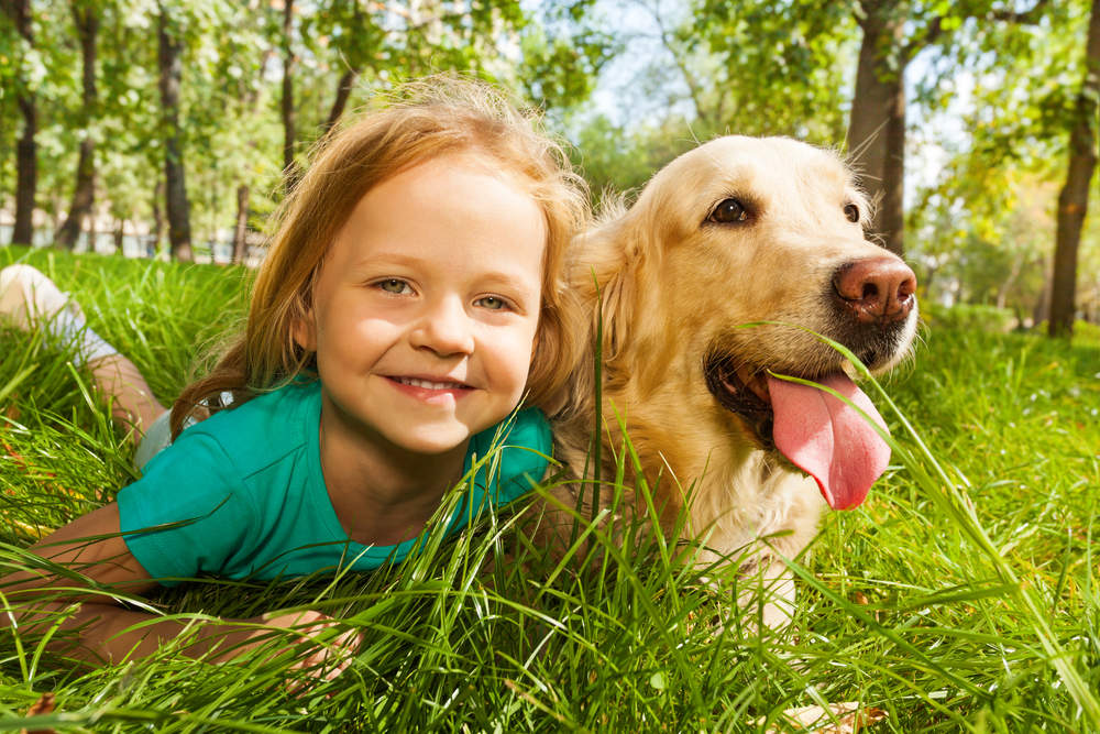 Happy Golden Retriever playing with little girl