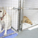 Will My Dog Be Okay in Boarding Kennels?