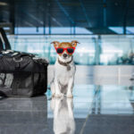 Do Dog's Ears Pop on Airplanes Due to Altitude Change?