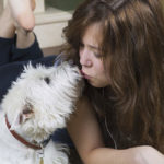 Westie Lifespan and Tips to Care for Senior Westies