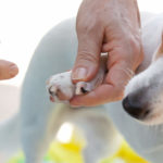 How to Trim Dog Nails That Are Overgrown