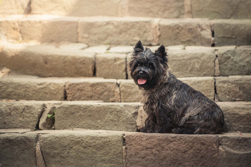 Cairn sitting on stone steps