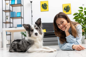 Border Collie living in an apartment