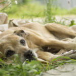 Do Dogs Know When They Are Dying?
