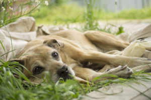 Dying dog on the grass