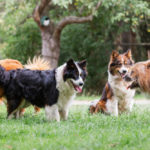 Why Does My Dog Pee on Other Dogs?