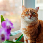 Ginger cat sitting by window
